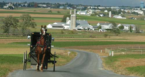 Amish Horse and buggy with Amish farmland in the background.